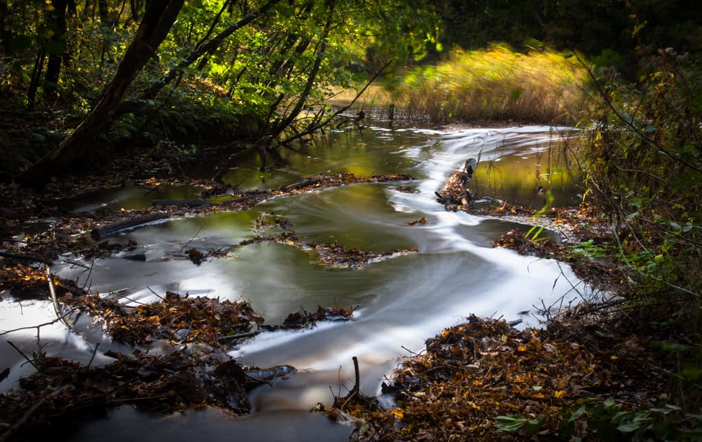 A long exposure landscape photograph of a woodland stream in Holland.