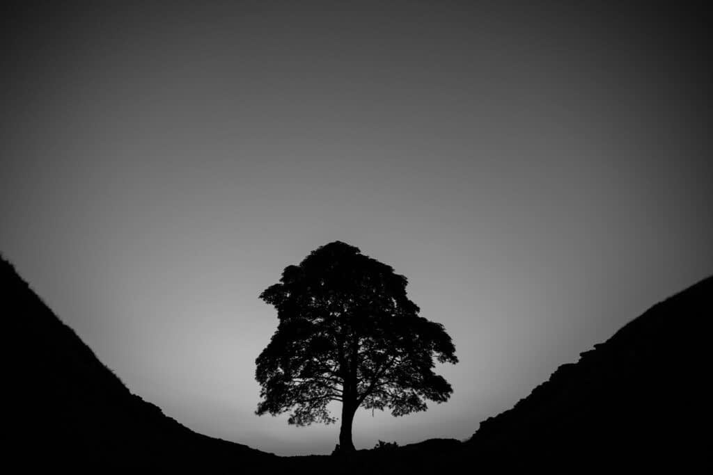 A silhouette landscape photograph of Sycamore Gap, Northumberland National Park, UK.