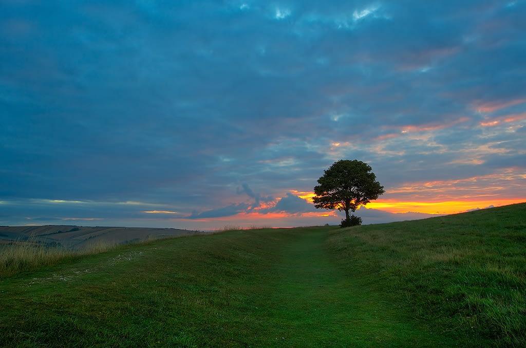 My Tree - fine art landscape photography by Paul Duval